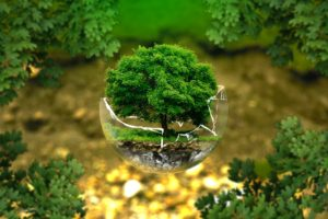 Image of a tree within a broken glass orb.